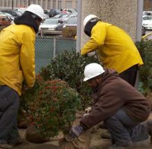 Workers salvaging plants from the Civic Arena