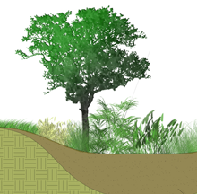 Cross section of a hillside and a tree